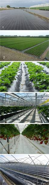 BTT Agrotextiles - Groundcovers for the strawberry growing industry