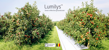 Win 6,000 m² Lumilys, Smart Reflective Groundcover!